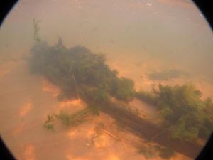 2011-09-01 VermontShoreWreck_019